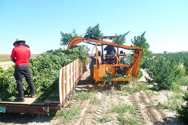 RMTD - CBD hemp harvester